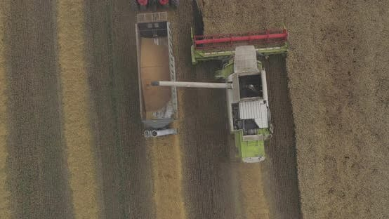 Thumbnail for Combine unloading grain seen from above
