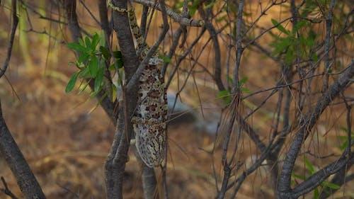 Chameleon on Tree