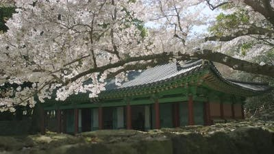 Traditional Korean architecture in harmony with nature.