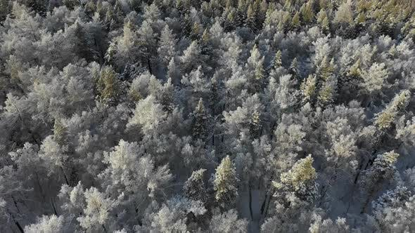 Thumbnail for Aerial View of Winter Forest. Fly Over Frozen Snowy Spruce and Pines