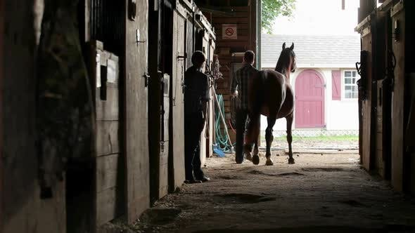 Thumbnail for Man and Woman Leading Horse out Of Stable