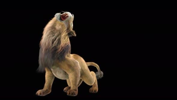 Thumbnail for Lion