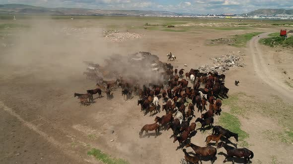 Cover Image for Herd Of Wild Horses