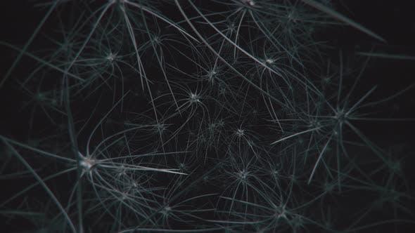 Brain Neuron Cells 4k