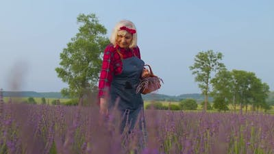 Senior Old Grandmother Farmer Growing Gardening Lavender Plant in Herb Garden Retirement Activities