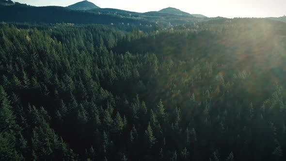 Thumbnail for Forest Nature Background Lens Flare Aerial