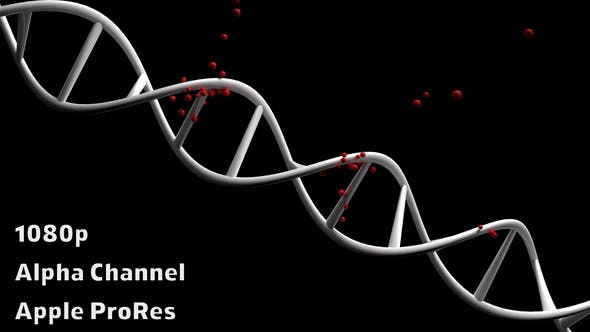 Virus Attack to Dna
