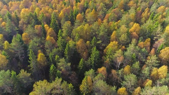 Thumbnail for Autumn Colors In The Forest Aerial Shot