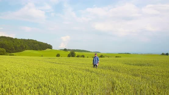 Thumbnail for Canola Field or Rapeseed Field Agriculture