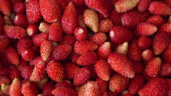 Thumbnail for Rotation Macro Wild Strawberry