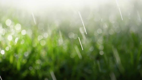 Thumbnail for Fresh Rain On The Grass