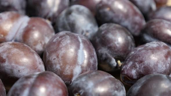 Thumbnail for Common plum Prunus domestica 4K tilting video