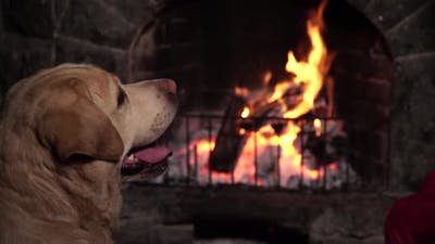 Dog Near Fireplace with Burning Fire