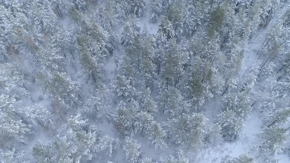 Thumbnail for Snowy Forest in Winter