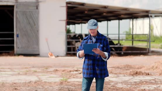 Thumbnail for Livestock Agriculture Farmer Working
