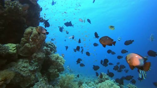 Red Sea Life and Colorful Reef