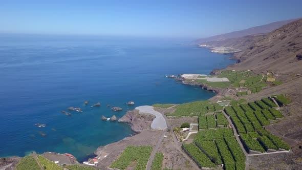 Thumbnail for Banana Cultivation on La Palma Island, Canary Islands, Spain