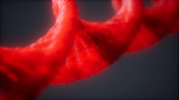 Thumbnail for Loopable Structure of the DNA Double Helix Animation