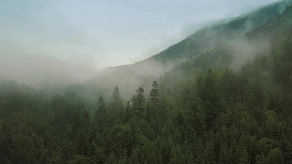 Thumbnail for Mystic and Foggy Drone Flight Over the Rainforest in Mountain