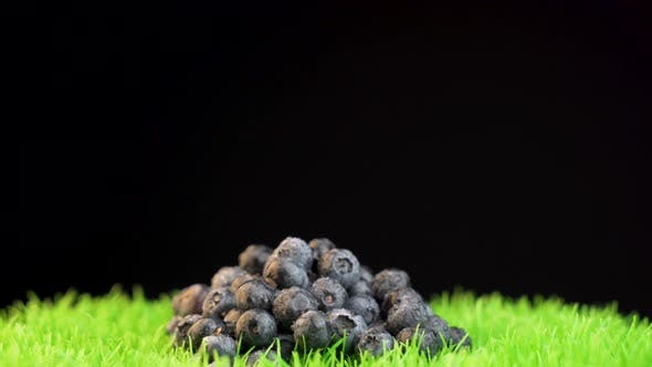 Thumbnail for Studio shot of organic blueberries isolated on grass surface