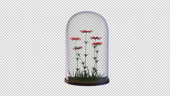 Wachsende rote Blumen in der Glaslaterne