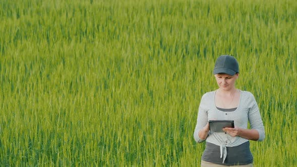 Thumbnail for Woman Farmer with Tablet in Hand Stands on Field Among Wheat Ears