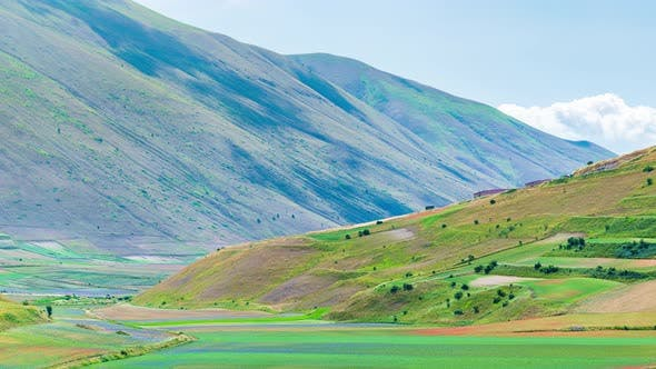 PAN: blooming cultivated fields, famous colourful flowering plain in the Apennines, Castelluccio di