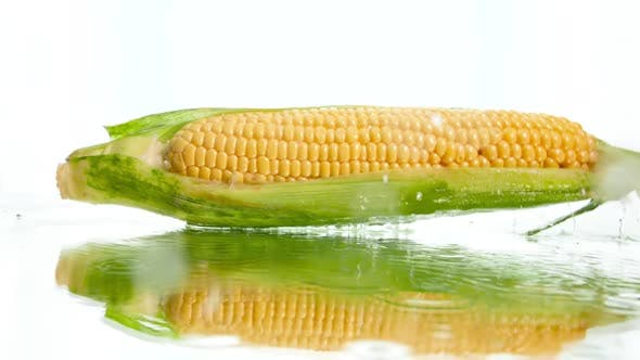 Thumbnail for Closeup Slow Mtoion Video of Fresh Raw Corn Cob Falling on Wet White Surface and Splashing Water
