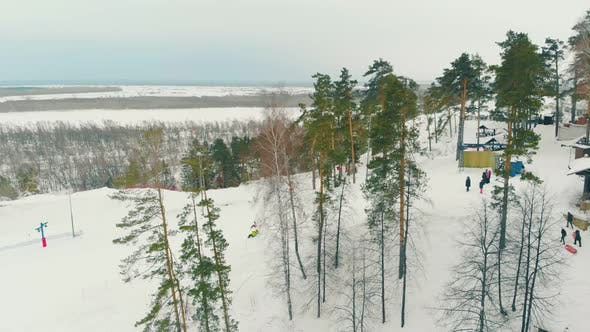 Thumbnail for Slope Covered with High Thin Pine Trees and Thick Snow Layer