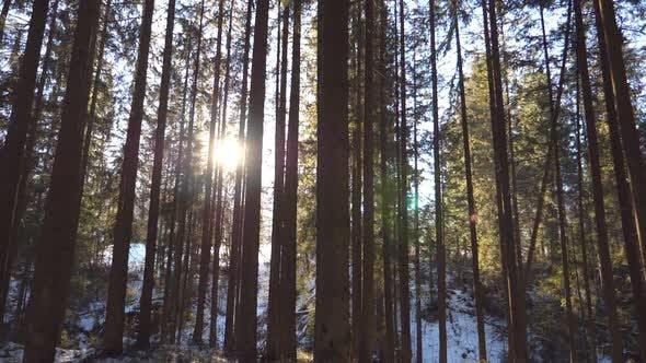 Dolly Shot of Sun Light Breaking Through Trees in Early Morning. Warm Sunbeams Illuminating Plants