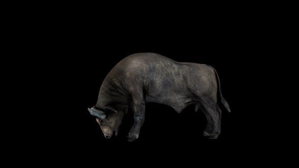 Thumbnail for Buffalo Head Attack