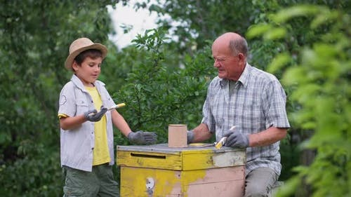 Organic Businesses a Hardworking Boy and His Grandfather the Beekeeper Paint Old Wooden Bee Hives in