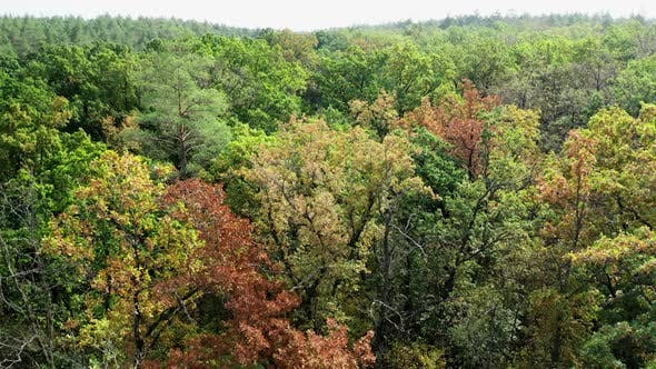 Thumbnail for Beautiful forest in early autumn