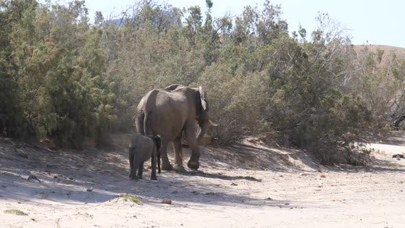 Mother and baby elephant walking at the dry Hoanib Riverbed