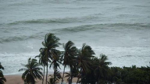 Shooting From an Overlooking the Sea Waves and Palms Beautiful Waves Bad Weather Turquoise Sea Waves