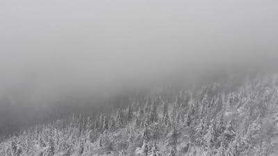 Winter Mountain Forest and Fog