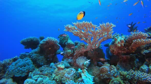 Thumbnail for Underwater Beautiful Coral Fish Garden