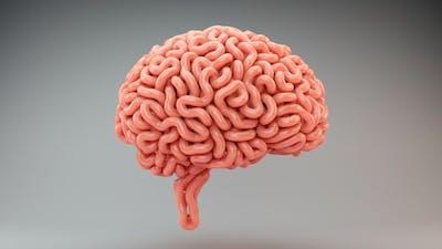 Brains Growth