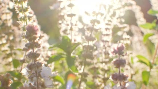 Country field flowers in front of low sun