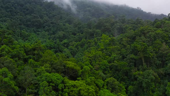 Thumbnail for The Mountains Are Covered in Rainforest. Mountain Peaks in a Tropical Climate