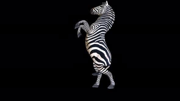 Thumbnail for 4K Zebra Attack