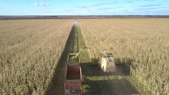 Thumbnail for Silage Corn Harvesting By Machinery Driving Along Filed