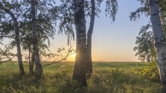 Thumbnail for Meadow Timelapse at the Summer or Autumn Time. Rural Field Witch Sun Rays, Trees and Green Grass