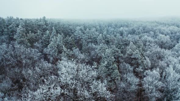 Thumbnail for Tranquil Atmosphere in Winter Forest.