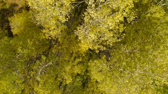 Thumbnail for Top Down Survey Over the Yellow Trees. Natural Texture of Autumn Forest.