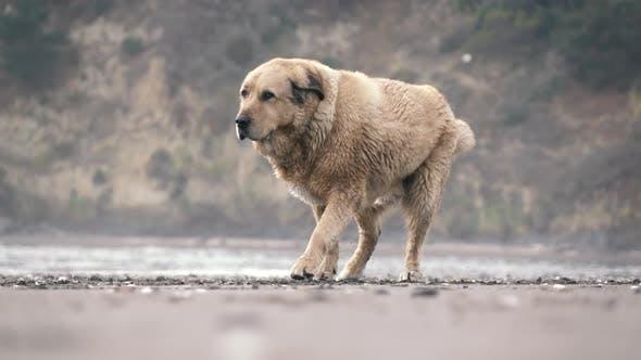Thumbnail for Dog Before Running