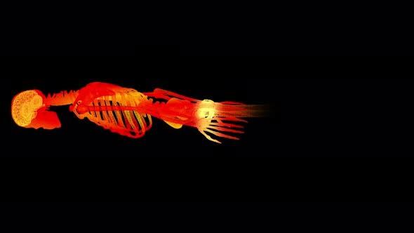 Thumbnail for Head Up Display of Advance Human Biomedical Diagnostic Skeleton 01