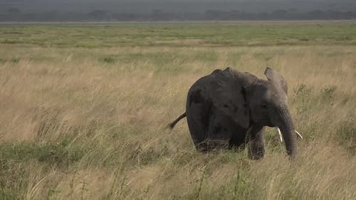 Elephants. Jeep safari in the African savannah.