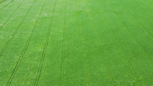 Cover Image for Aerial View Green Field And Wind