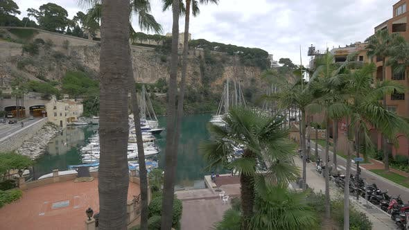 Thumbnail for High angle of palm trees and Port Fontvieille in Monaco